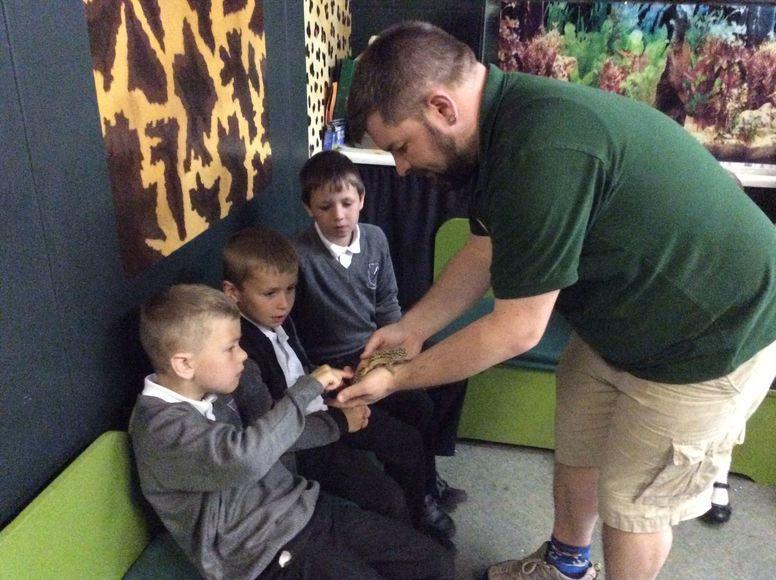 Year 2 stroking a reptile