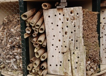 Creating a New Bug Hotel